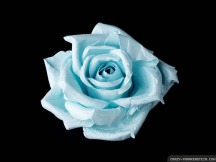 Image result for light blue rose meaning